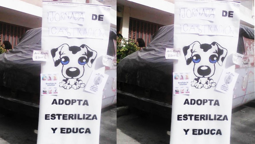 (Foto: Animales Naturaleza GT)