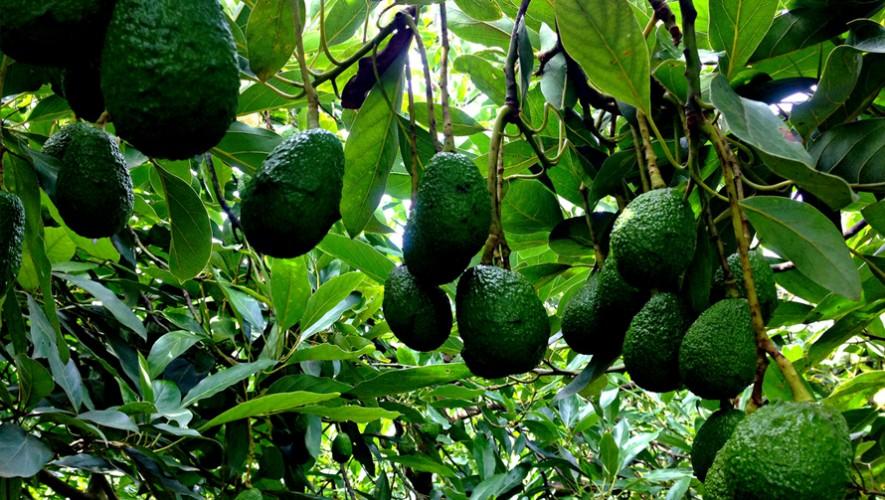 (Foto: The Avocado Tour)