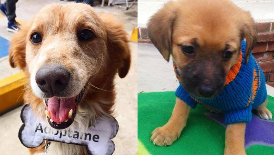 Sé el primero en darle una familia a una mascota que lo necesita. (Foto: Guate Unida por los Animales)
