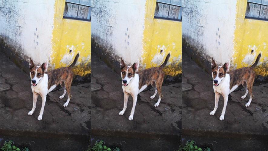 (Foto: Rescate y Cuidado animal Guatemala)