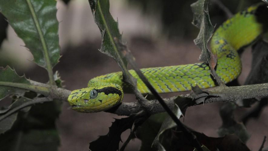 Exhibición de serpientes en Valhalla, San Miguel Dueñas | Noviembre 2016