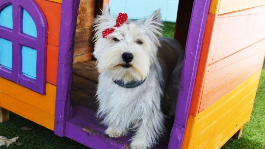 (Foto: WUF Doggy Daycare)
