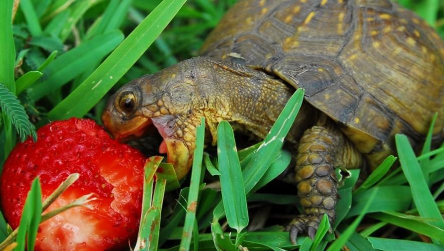 Día para alimentar las tortugas de Museo Miraflores |Diciembre 2016