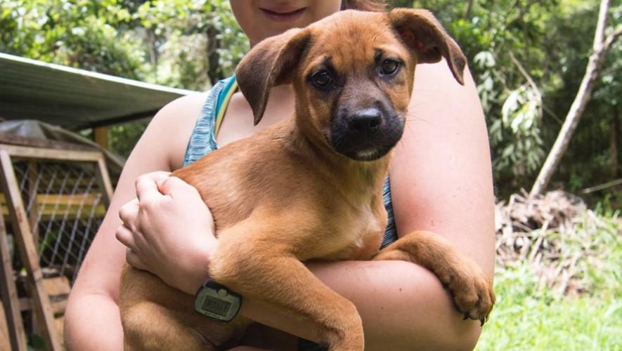 El refugio de animales Animal Aware necesita mucho papel periódico para sus mascotas.(Foto: Animal Aware)