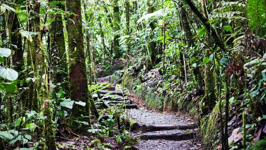biotopo del quetzal lugares a los que puedes ir si On biotopos de guatemala