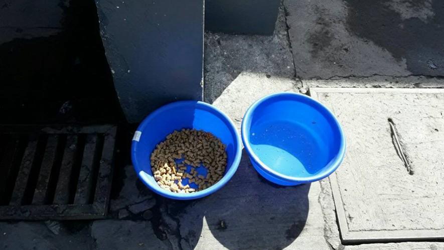 Baldes con agua y comida para perros callejeros instalados en la gasolinera Shell de Boca del Monte. (Foto: Bianca Turcios)