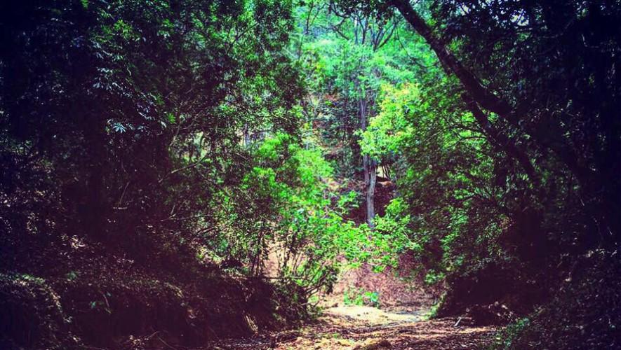 (Foto: Parque Ecologico Jacarandas de Cayala)