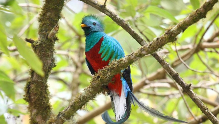 Viaje a Cataratas La Igualdad y avistamiento de Quetzales en San Marcos | Enero 2017