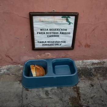 Foto: Antigua Street Dogs - Guatemala)