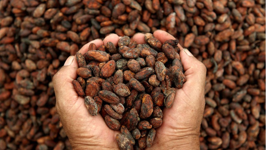 Tour en una plantación de cacao de ChocoMuseo Antigua