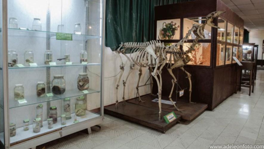 Visita guiada en Museo de Historia Natural de la Universidad de San Carlos