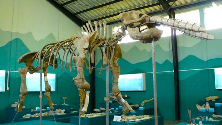 Image result for Museo de Paleontología y Arqueología en Estanzuela