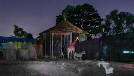 Noches de Luna en el Zoológico La Aurora 2017 en la Ciudad de Guatemala