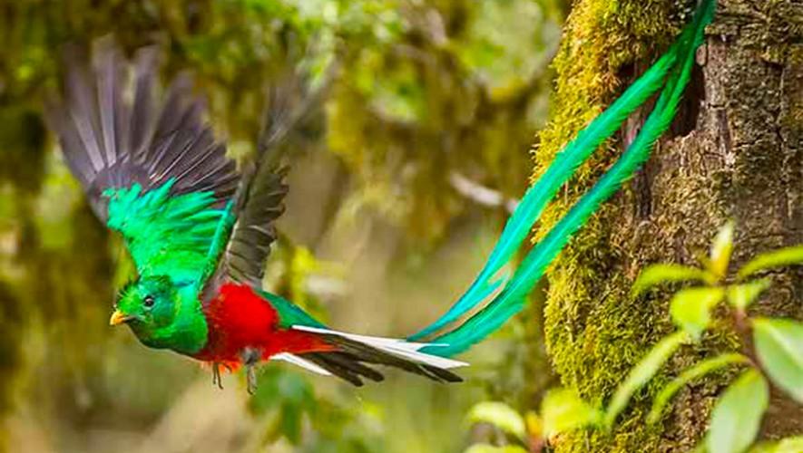Quetzal Lugares Donde Puedes Observar Los Simbolos Patrios De