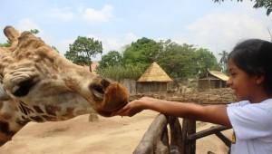 Cursos interactivos en Zoológico La Aurora