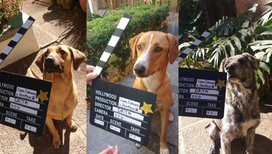 Proyección de película al aire libre a beneficio de animales rescatados | Marzo 2017