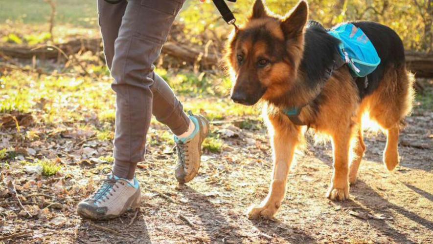 Dog Trekking en parque Green Rush en Carretera a El Salvador | Abril 2017