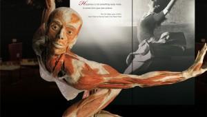 Body Worlds Guatemala: La exhibición de cuerpos más impresionante del mundo