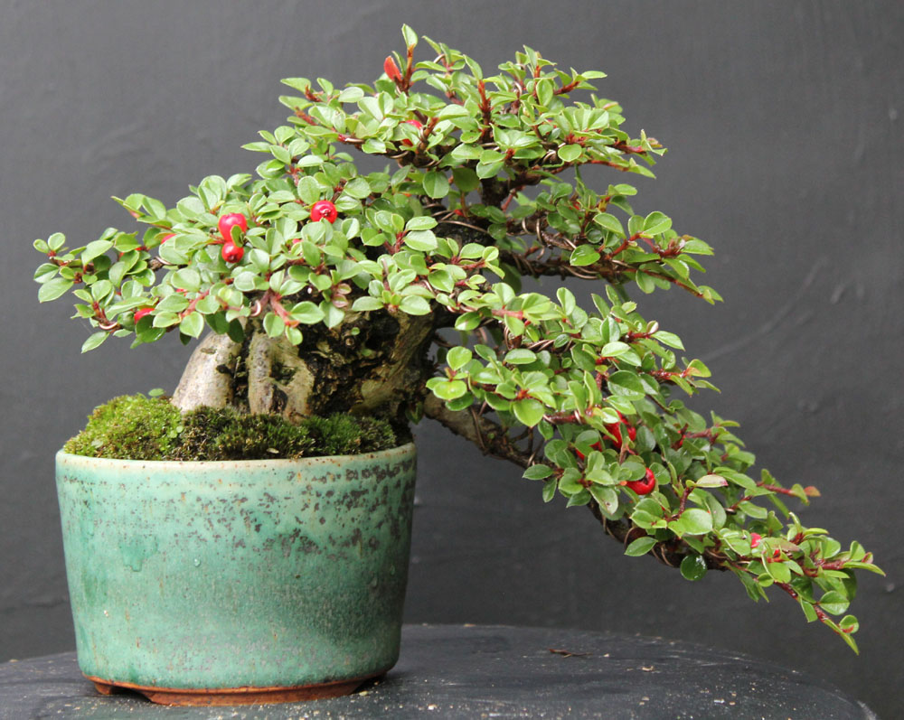 Taller de bons i cultivo y cuidado en deco city marzo - Cultivo de bonsai ...