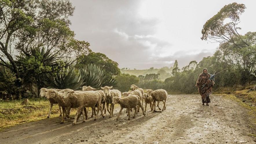 Participa en el concurso de fotografía y representa a Guatemala (Foto: Geovanny Avila)
