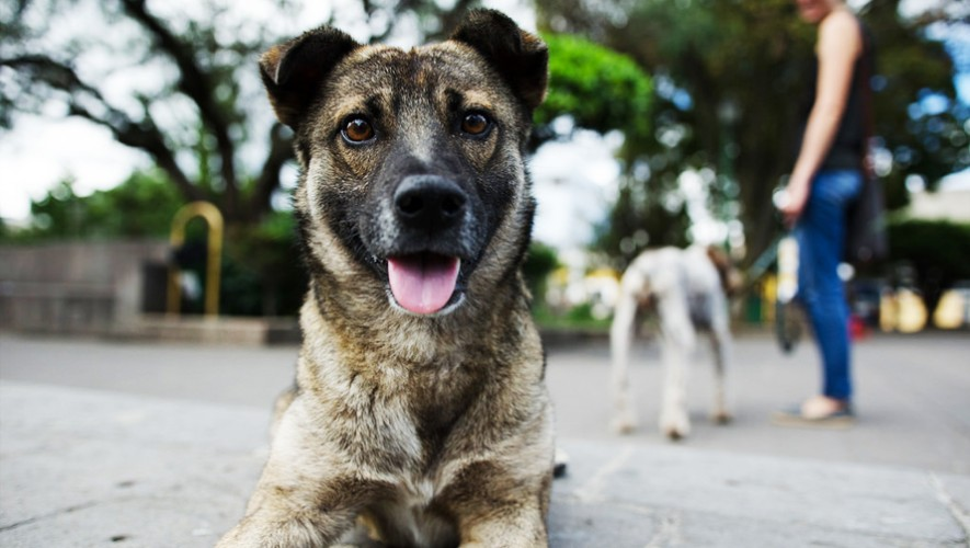 La recién aprobada ley contra el maltrato animal en Guatemala es una de las más completas del mundo. (Foto: Flickr Hive Mind)