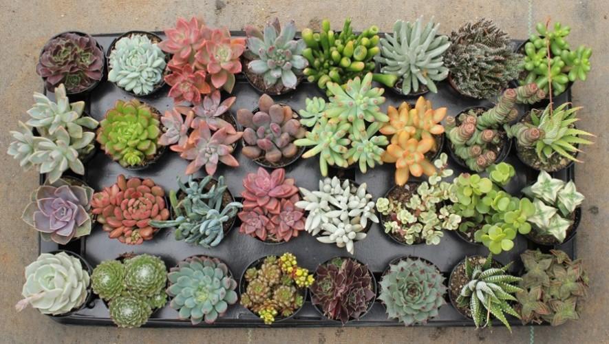 Intercambio de suculentas y cactus en Garden Depot | Abril 2017