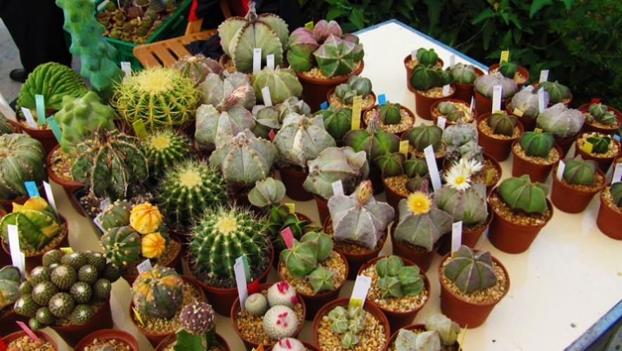Exposición y talleres de Cactus y Suculentas en Tikal Futura| Marzo 2017