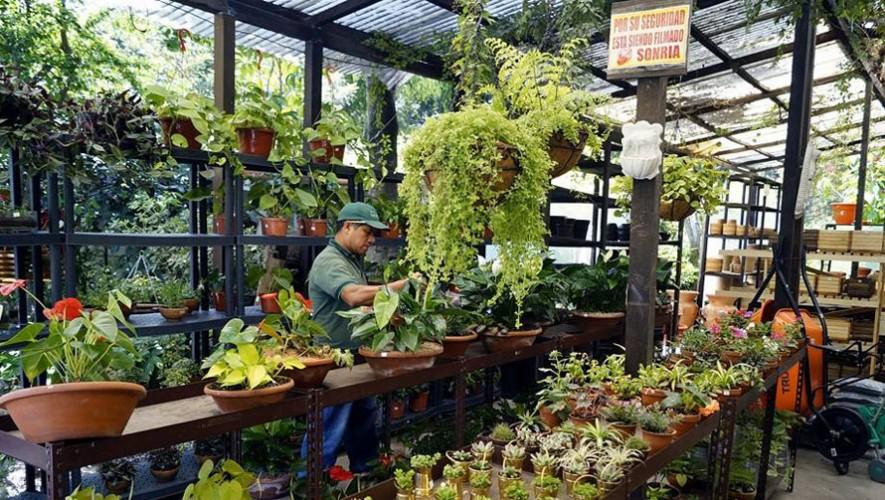 Restaurante ecol gico la escalonia restaurantes for Viveros de plantas en renca