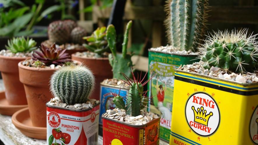Intercambio de suculentas y cactus de Cambalache| Marzo 2017