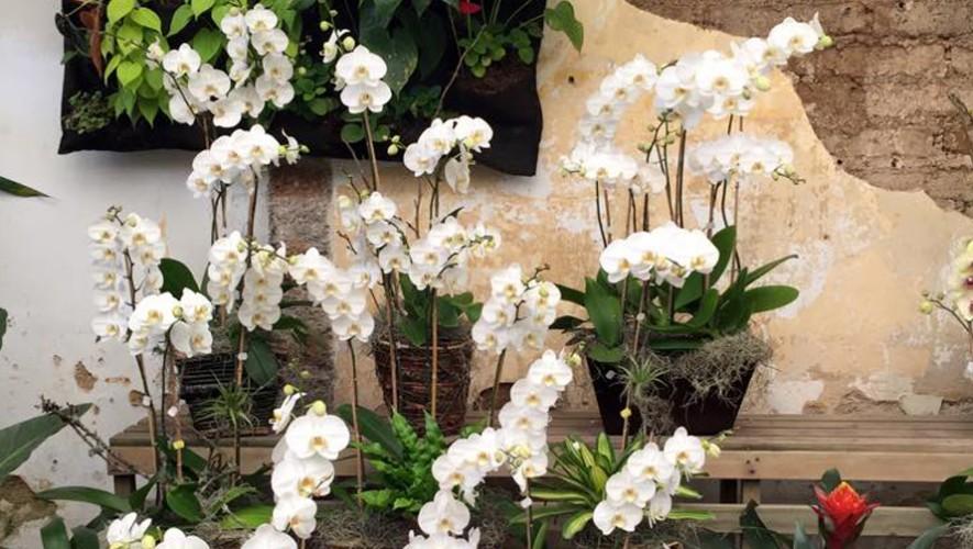 Taller sobre cuidados de orquídeas en zona 10 | Marzo 2017