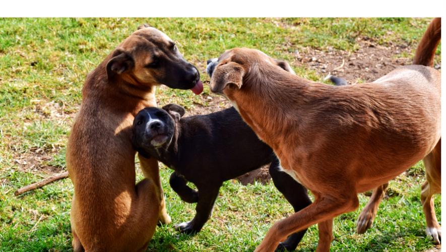 Concurso de fotografía de Perros Mestizos Feria de Adopción de Mascotas| Mayo 2017