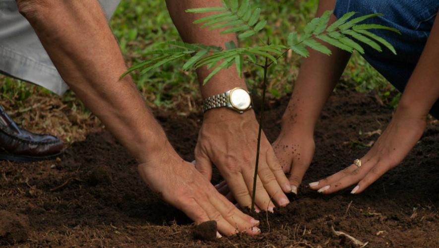 Reforestación por Día de la Tierra en Universidad de San Carlos | 2017