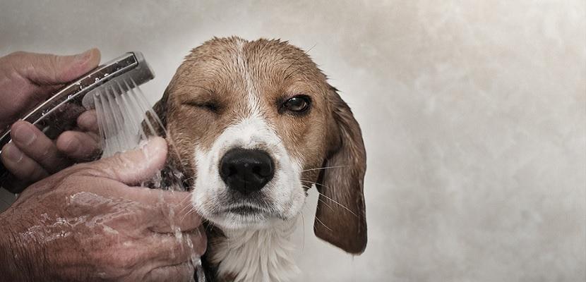 Perro bañándose