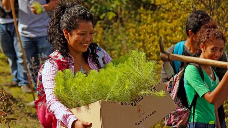 Recolección de 8,000 árboles para el Volcán Pacaya | 2017