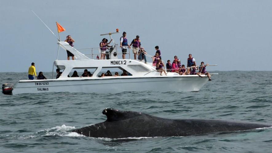 Avistamiento de fauna marina y pesca artesanal en El Paredón   Abril 2017
