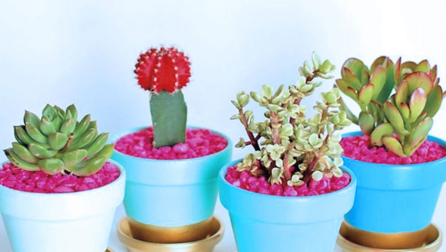 Taller de cactus y suculentas en Sangha Antigua Guatemala | Mayo 2017