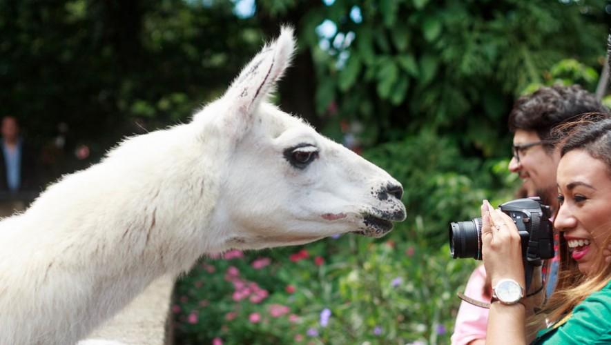 Recorrido VIP por el Zoológico con El Club Fotográfico de Guatemala | Abril 2017