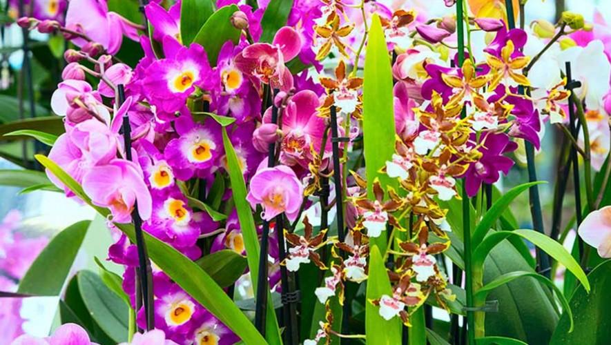 Exposición Nacional de Orquídeas | Junio 2017