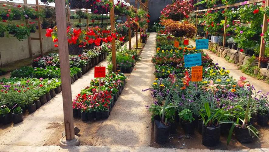 Vivero san crist bal mixco lugares en mixco guatemala for Plantas que hay en un vivero