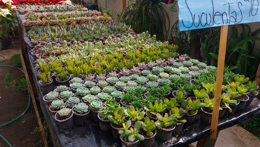 Vivero san crist bal mixco lugares en mixco guatemala for Que es un vivero ornamental