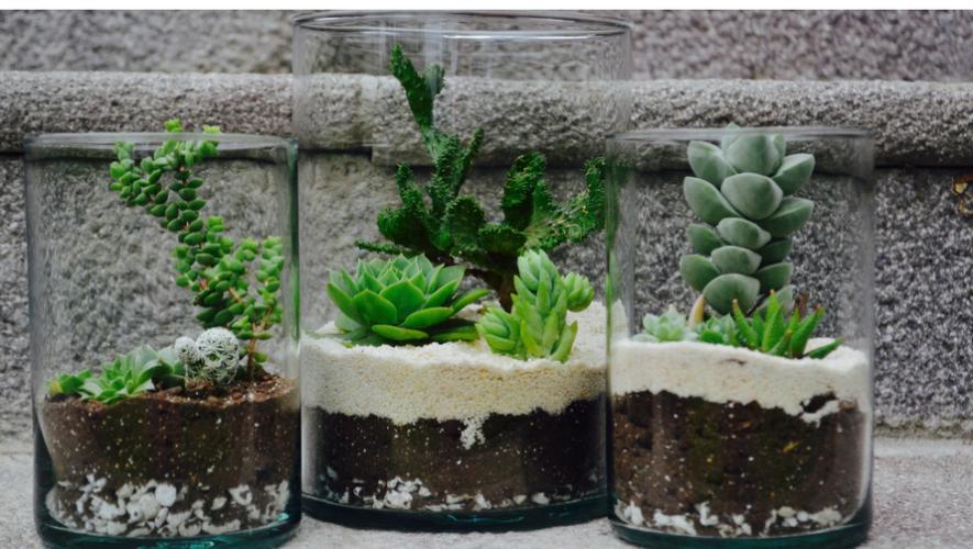Taller de cultivo orgánico de cactus y suculentas en La Teterie | Mayo 2017
