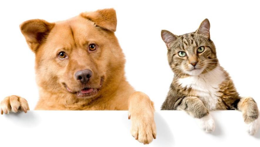 Feria de adopciones para perros y gatos | Junio 2017