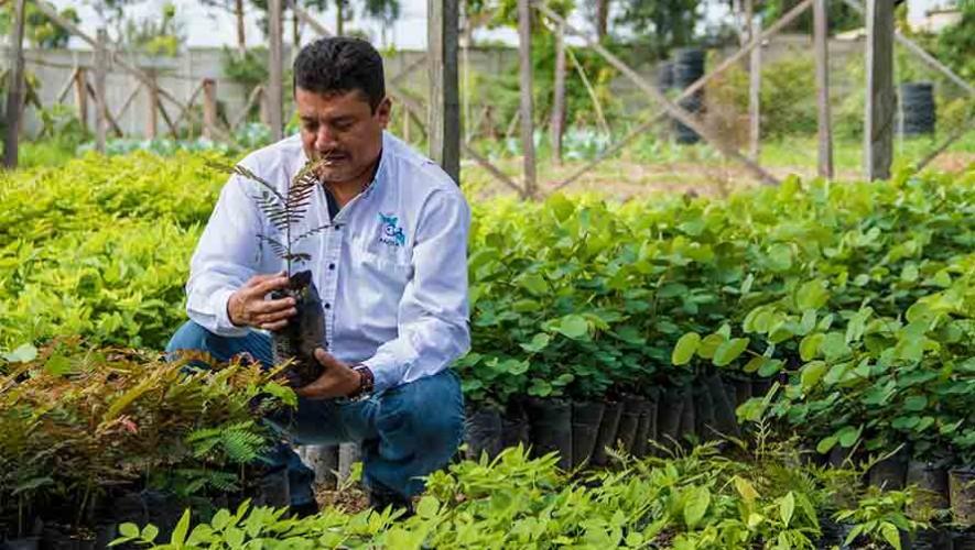 Buscan voluntarios para sembrar 50,000 árboles en Amatitlán