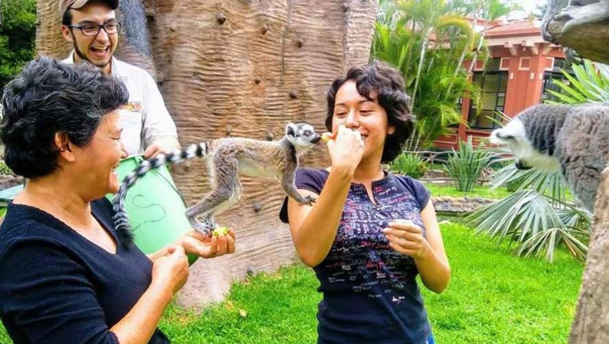 Convocatoria para ser voluntario en el Zoológico La Aurora