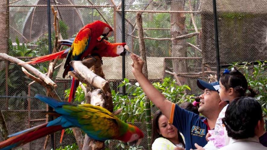 Convocatoria para ser voluntario en el Zoológico La Aurora en Guatemala 2017