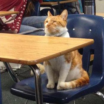 Gato-Estudiante