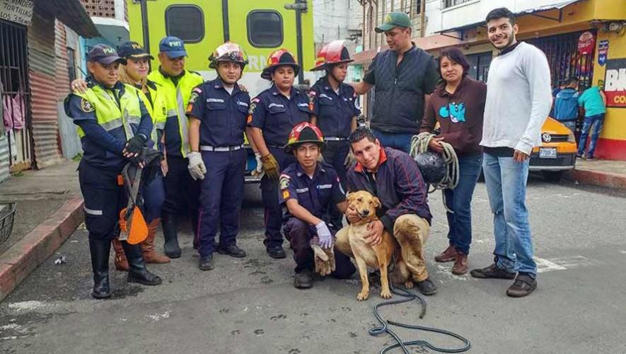 Guatemaltecos rescatan a perro que había caído en un barranco