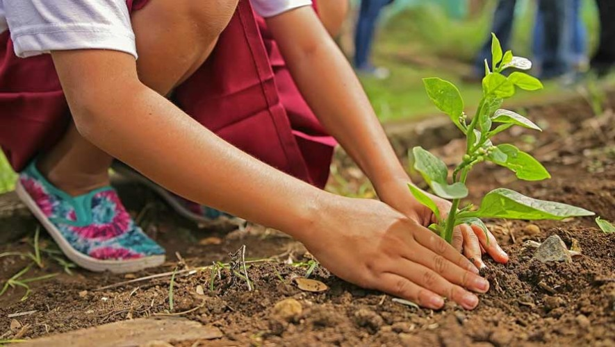 Guatemaltecos sembrarán 100,000 mil árboles en Chisec, Alta Verapaz