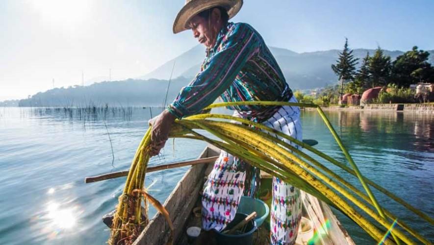 Guatemaltecos siembran tul para conservar el Lago de Atitlán