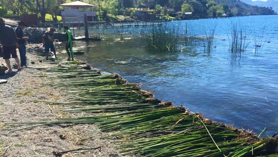 Plantaciones de tul para el Lago de Atitlán